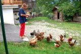 Questo mangiano le nostre galline